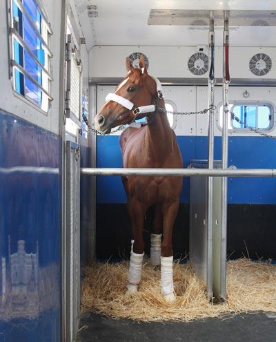 Brook Ledge Horse Transportation