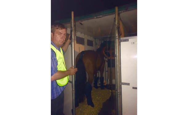 Air Transport Brook Ledge Horse Transportation